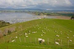 Vårfält nära Auckland, Nya Zeeland Royaltyfria Foton