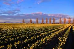 Vårfält och gränd på solnedgången arkivbilder