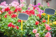 Vårfärg blommar till salu på marknad Fotografering för Bildbyråer