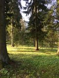 Vårfärger i lettisk skog Royaltyfri Foto
