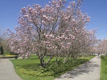 Vårfärgträd i den Niagara nedgången Kanada Royaltyfri Fotografi