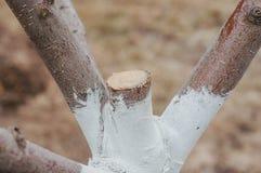 Vårförberedelse av träd för säsongen som arbeta i trädgården på en privat täppa arkivbild