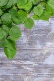 Vårfilial på lantlig bakgrund arkivfoton