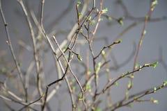 Vårfilialer i solljusleken Fotografering för Bildbyråer