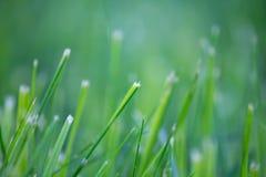 Vårgräs Royaltyfri Bild
