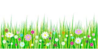 Vårgräs och blommagränser Påskgarnering med den vårgräs och ängen blommar bakgrund isolerad white vektor royaltyfri illustrationer