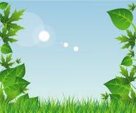 Vårgräs och sidor royaltyfri illustrationer