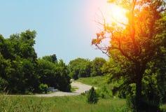 Vårgräs växer på fältet mot bakgrunden av solnedgången Vårlandskappanorama Arkivbild