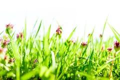 Vårgräsbakgrund royaltyfria bilder