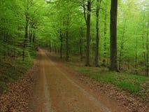 Vårgräsplan Arkivbild
