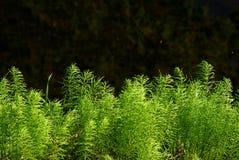 Vårgräsplaner nära vattnet royaltyfri foto