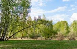 Vårgräsplanskog på en solig dag arkivfoton