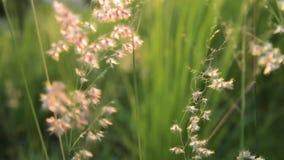 Vårgrässlut upp stock video