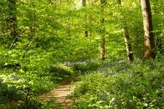Vårgrönska i Sussex royaltyfri foto