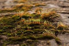 Vårgroddar av gröna växter Fotografering för Bildbyråer