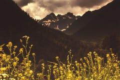Vårguling blommar mot bakgrunden av hög Caucasian M royaltyfri fotografi