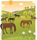 Vårhästar Royaltyfria Foton