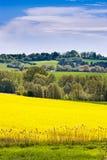 vårjordbruk - guling våldtar fältet nära Sobotka, det bohemiska paradislandskapet, Tjeckien Royaltyfria Bilder
