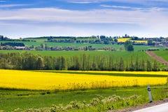 vårjordbruk - guling våldtar fältet nära Sobotka, det bohemiska paradislandskapet, Tjeckien Fotografering för Bildbyråer