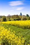 vårjordbruk - guling våldtar fältet nära Sobotka, det bohemiska paradislandskapet, Tjeckien Royaltyfri Bild