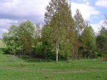 Vårknoppning på träd Arkivfoton
