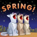 Vårkort med katter Royaltyfri Foto