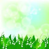 Vårkortbakgrund med liljekonvaljen Arkivfoto