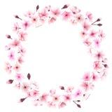 Vårkrans med körsbärsröda blomningar placera text Fotografering för Bildbyråer