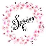 Vårkrans med körsbärsröda blomningar placera text Arkivbild