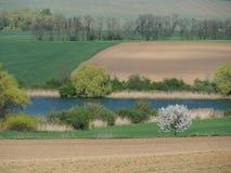 Vårland i Slovakien Royaltyfria Bilder