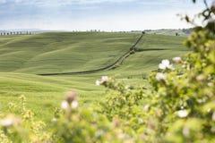 Vårlandskap av fält Tuscany Royaltyfri Foto