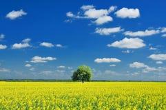 Vårlandskap, ensamt träd och rapsfröfält Arkivbilder