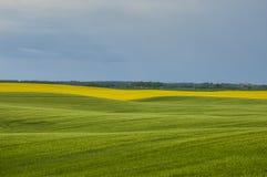 Vårlandskap i fälten arkivfoton