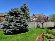 Vårlandskap i trädgård arkivfoton