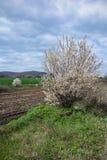 Vårlandskap med blommande träd Arkivbild