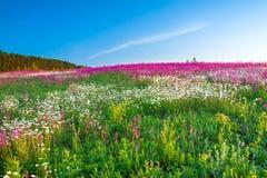 Vårlandskap med blommor på en äng arkivfoto