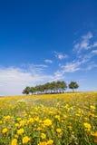 Vårlandskap med ett fält av gula blommor arkivfoto