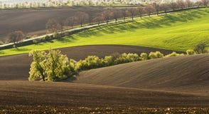 Vårlandskap med fältet Arkivfoto