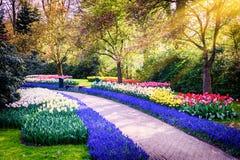 Vårlandskap med färgrika blommor Arkivbilder
