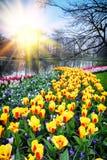 Vårlandskap med färgrika tulpan royaltyfri fotografi