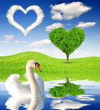 Vårlandskap med svanen Arkivbilder
