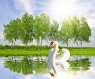 Vårlandskap med svanen royaltyfri fotografi