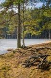 Vårlandskap på sjön Fotografering för Bildbyråer