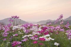 Vårlandskap på solnedgången Arkivbild