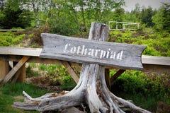 Vårlandskap - svarta Forest Hiking på den Lothar banan i den svarta skogen, Tyskland Arkivbild