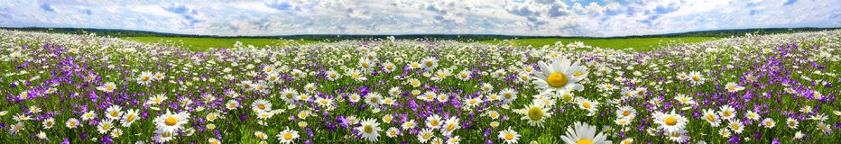 Vårlandskappanorama med blomning blommar på äng arkivbilder