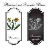 Vårmaskrosen blommar med sidor Stock Illustrationer