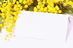 Vårmimosabakgrund - det vita kortet med utrymme för text i mimosan blommar Arkivfoto