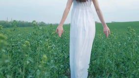 Vårmodeståenden av en härlig lycklig ung kvinna i den vita klänningen med långt brunt hår går det gröna fältet i arkivfilmer