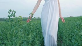 Vårmodeståenden av en härlig lycklig ung kvinna i den vita klänningen med långt brunt hår går det gröna fältet i stock video